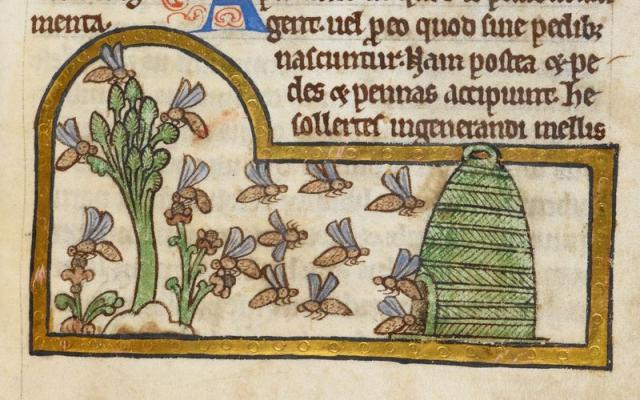 Detail of a miniature of bees collecting nectar and returning to their hive, from a bestiary with theological texts, England, c. 1200 – c. 1210,
